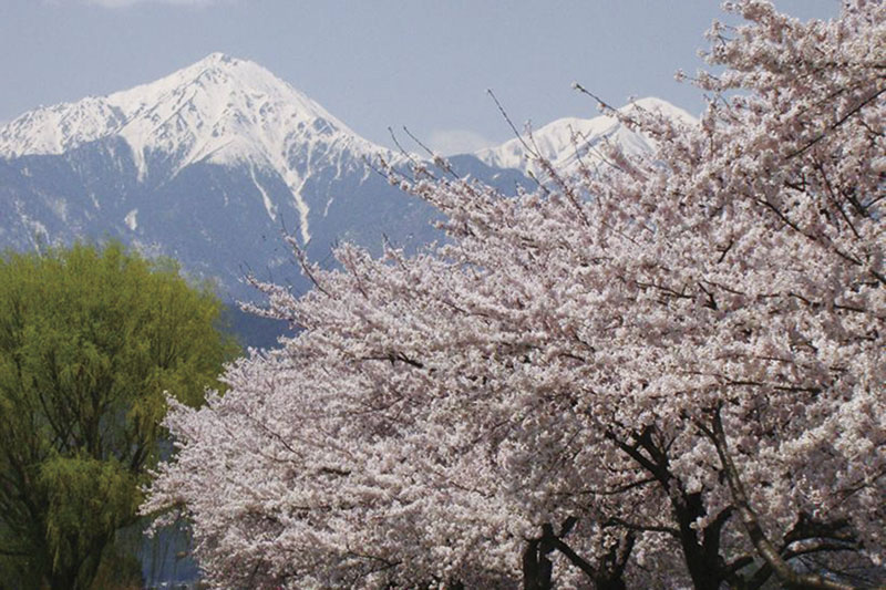桜トレッキング