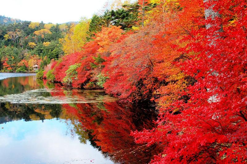 神秘の苔の森と白駒の池ハイキング