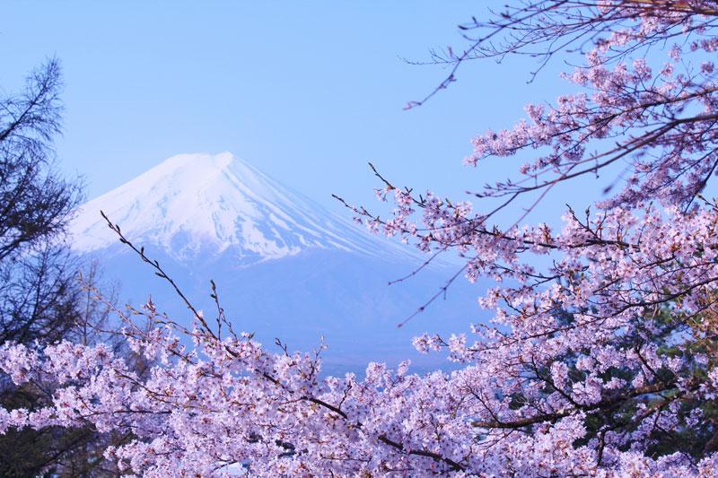 安曇野桜めぐりハイキング