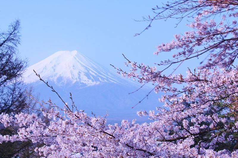 *安曇野桜&フラワーウォッチング*