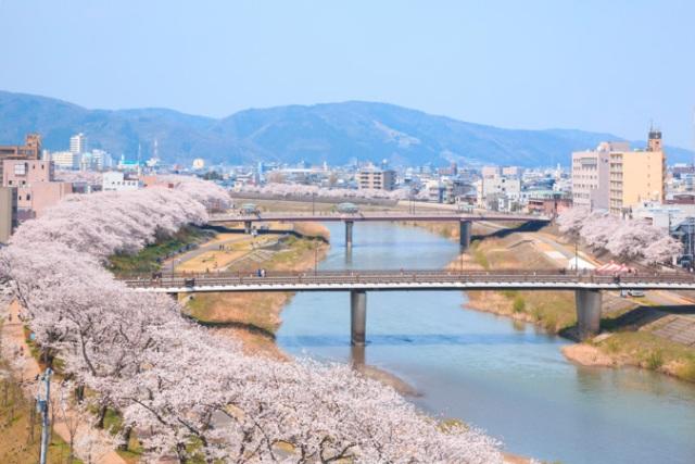 足羽川の桜並木観賞と越前の歴史に触れる2日間