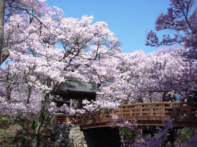 中山道の宿場町『奈良井宿』と天下第一の桜『高遠城址』をめぐる2日間