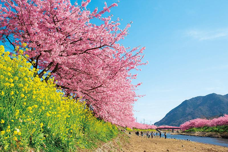 ~早咲きの梅・桜を愛でる~ 早春の伊豆河津・熱海2日間