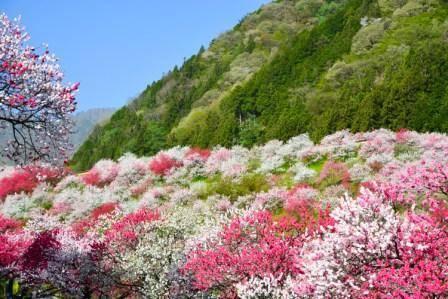 阿智村の『花桃まつり』と『日本一の星空』鑑賞日帰りバスツアー