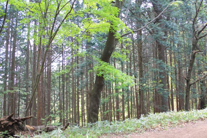 秋のハイキング