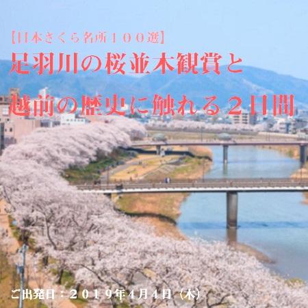 「日本さくら名所100選」に選ばれた「足羽川」の桜並木と、加賀地方のお花見スポット「芦城公園」でのお花見をお楽しみください♪