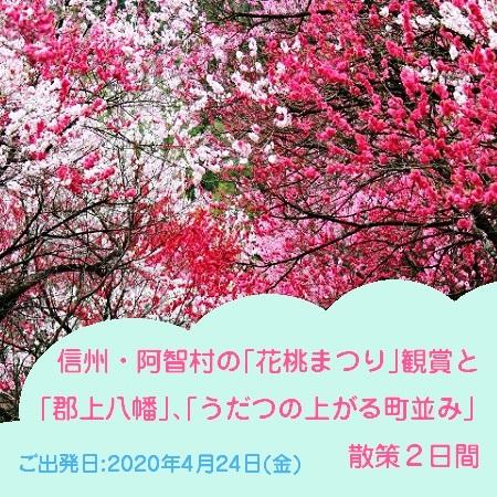 「日本一の桃源郷」と呼ばれる阿智村で、花桃の咲く美しい景色をお楽しみください