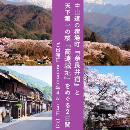 「天下第一の桜」と称され、日本の「さくら名所100選」にも選ばれている高遠城址公園の桜を見学