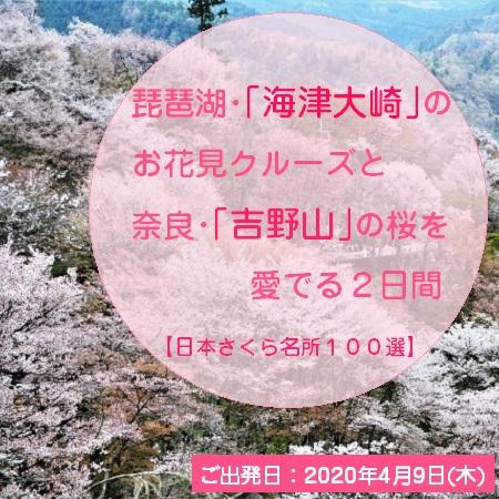 「日本さくら名所100選」に選ばれている「海津大崎」、「吉野山」へご案内