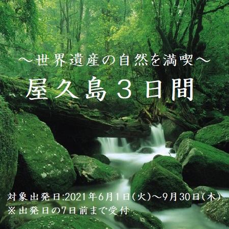 世界遺産・屋久島の自然を満喫するプランです