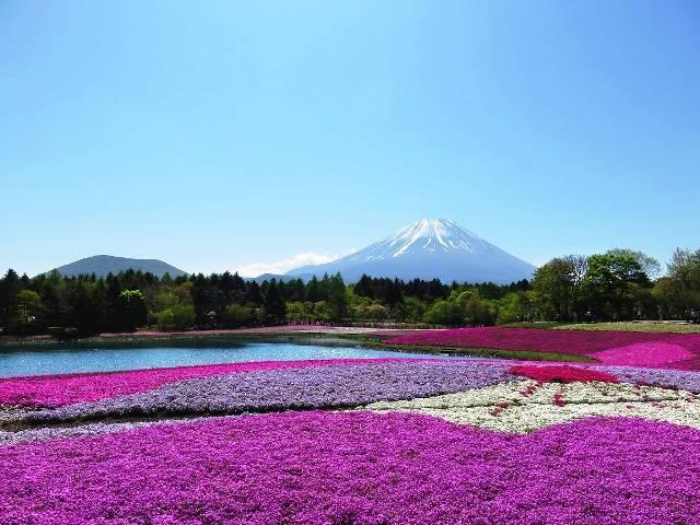 『富士芝桜まつり』観賞と富士山を望む『三保の松原』と『日本平』2日間