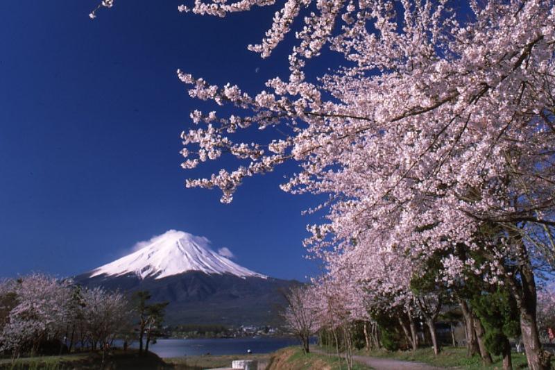 富士周辺と高遠城址公園の桜を愛でる3日間