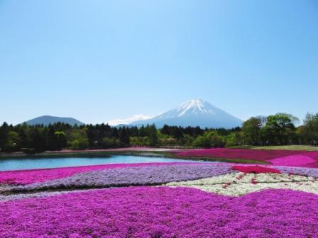 花桃まつり・富士芝桜まつり鑑賞と大井川SL列車を楽しむ3日間