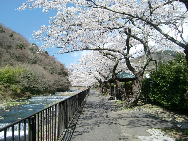 箱根の桜名所と富士周辺の春を愉しむ2日間