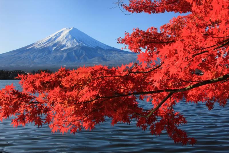富士周辺紅葉名所めぐり3日間