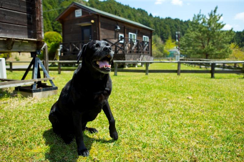 ◆愛犬リゾートホテル運営◆